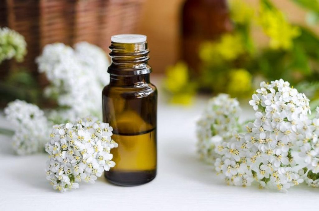 Yarrow essential oil for varicose veins