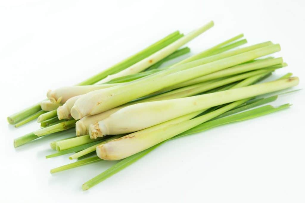 Lemongrass essential oil for acne