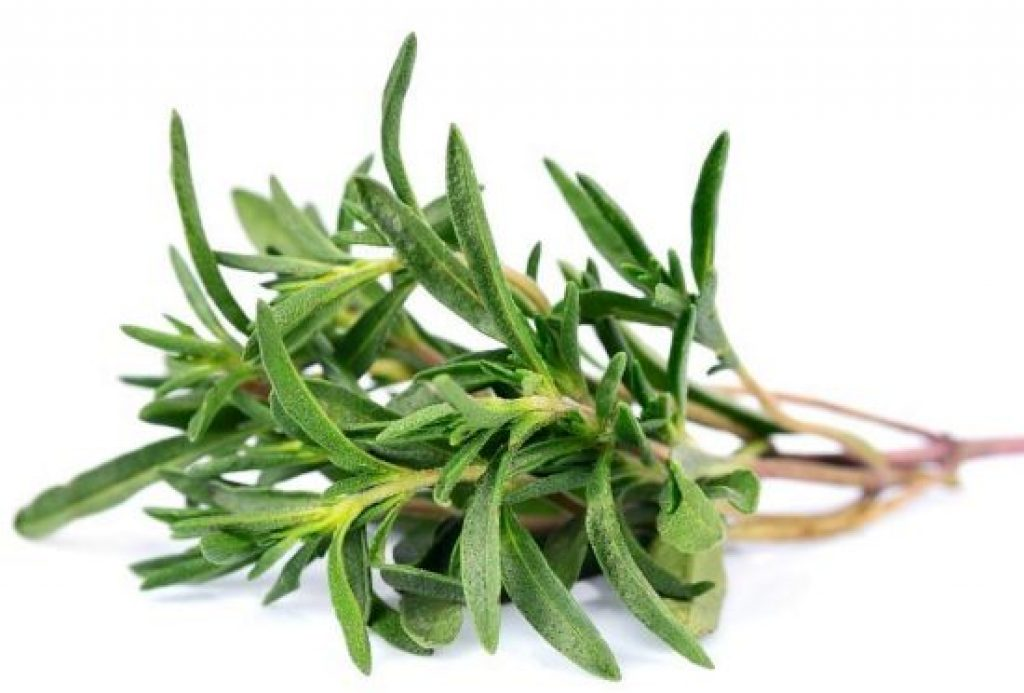 Thyme essential oil for gout