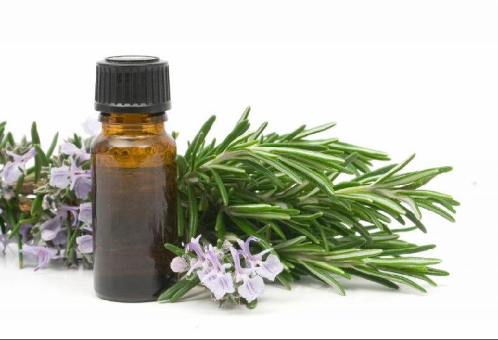 Rosemary Essential Oils for Allergies