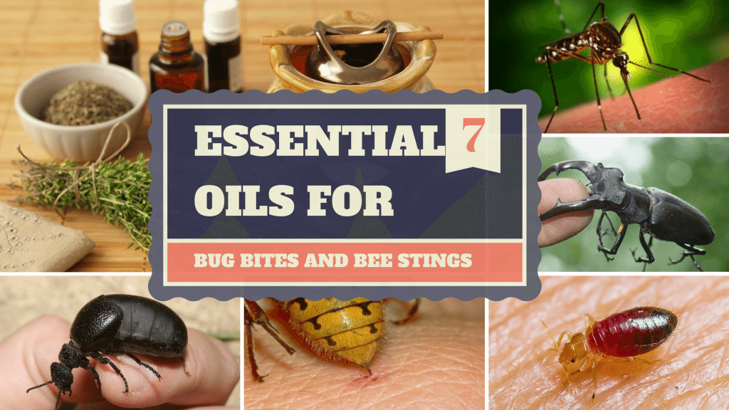 Essential Oils For Bug Bites