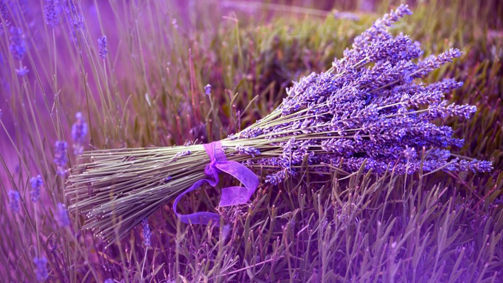 Lavender essential oil for Itchy skin