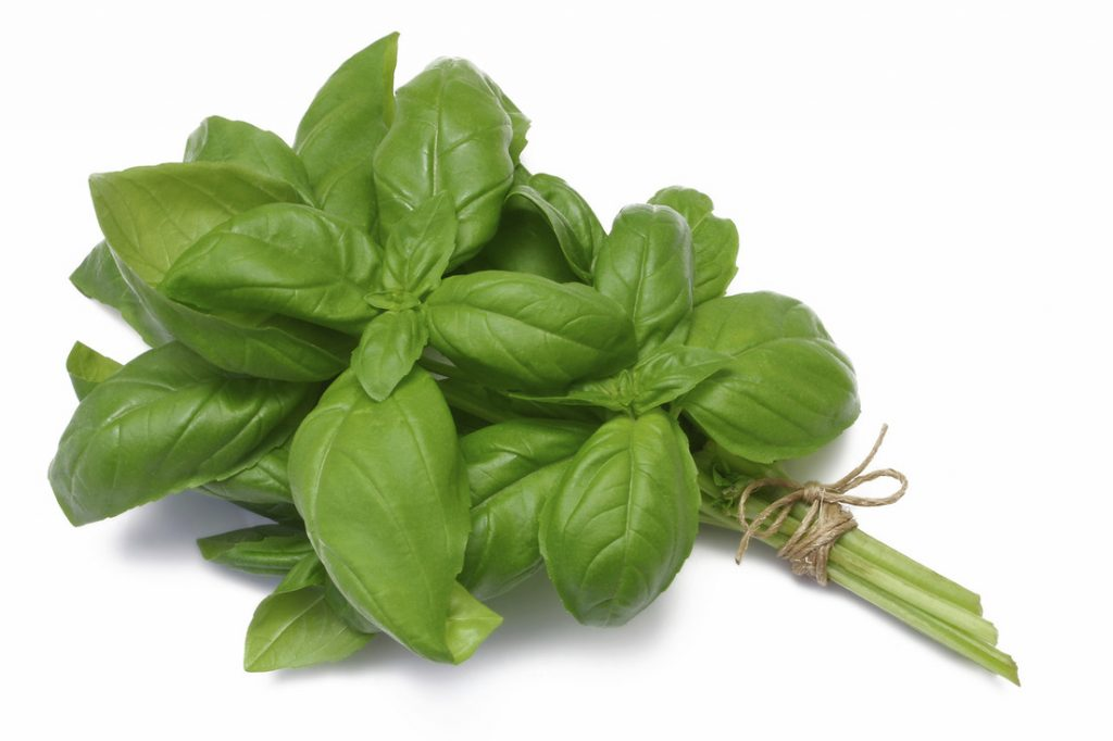 Basil essential oil for menopause