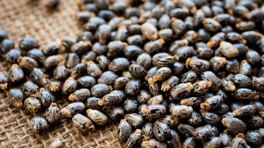 Castor seed oil for constipation