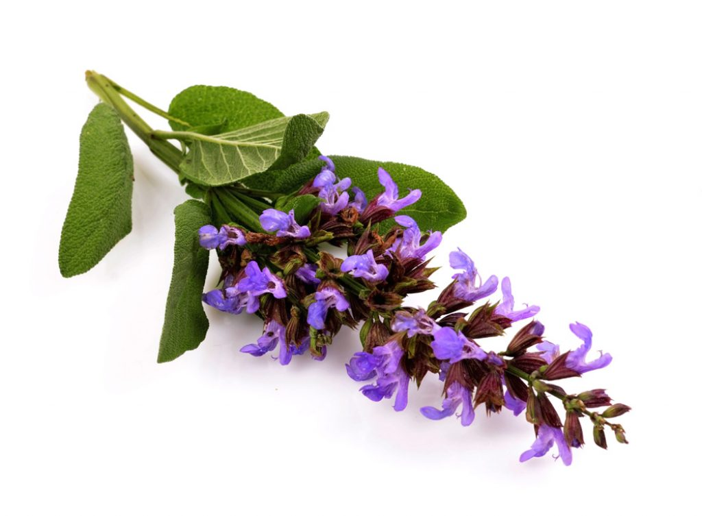 Clary Sage Essential Oil for Back Pain