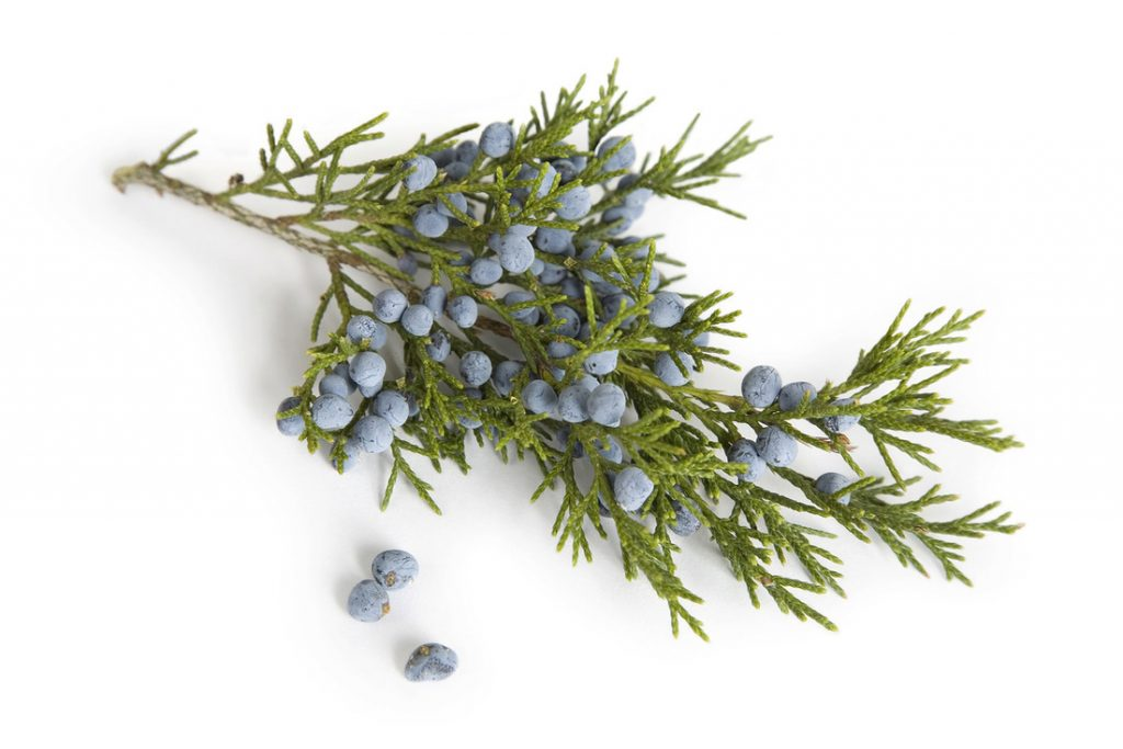 Juniper essential oil for cellulite