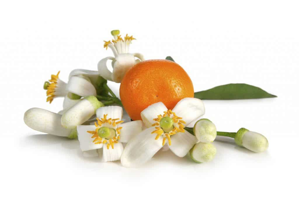 Neroli essential oil for romance