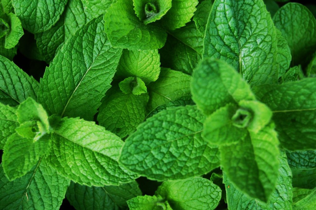 Peppermint essential oil for Itchy skin