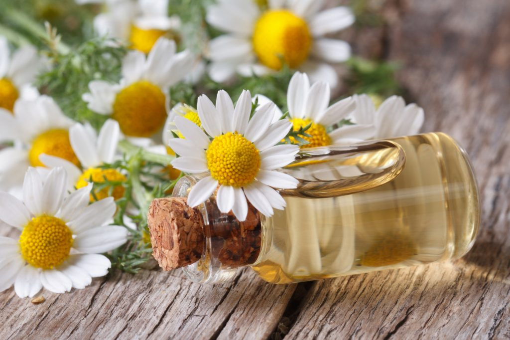 Roman Chamomile Essential Oil for Back Pain