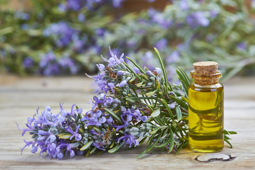 Rosemary Essential Oil for Back Pain