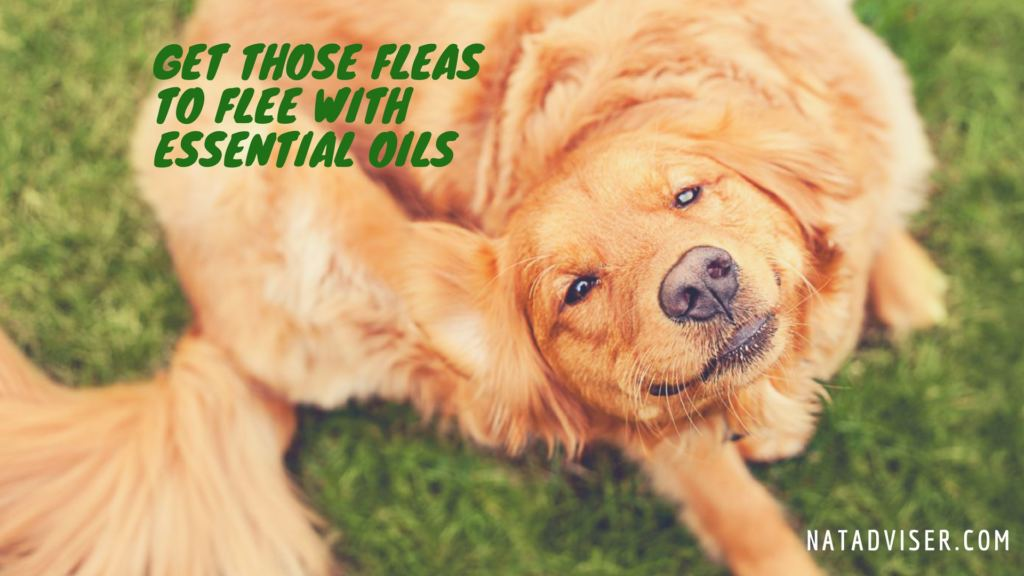 Get Those Fleas To Flee With Essential Oils