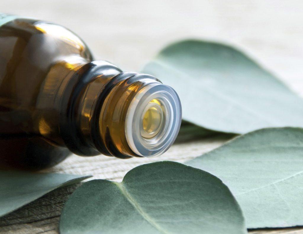 Eucalyptus essential oil for asthma