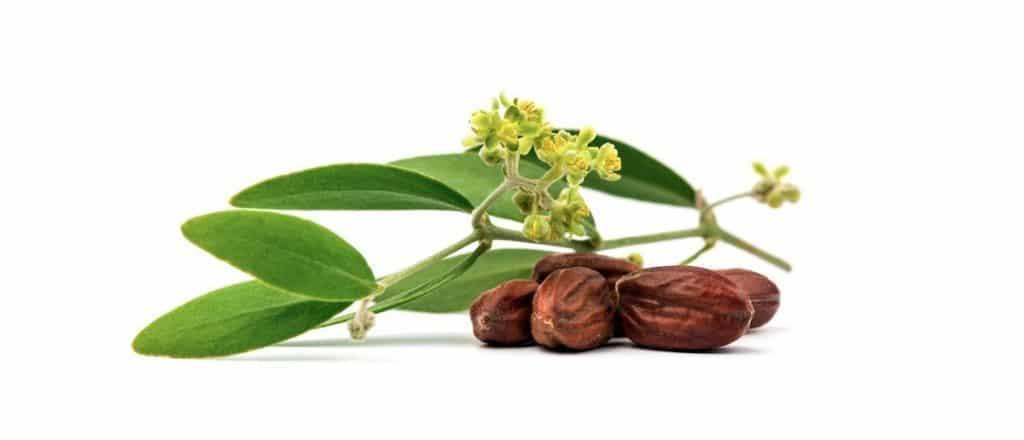 Jojoba oil for ringworm
