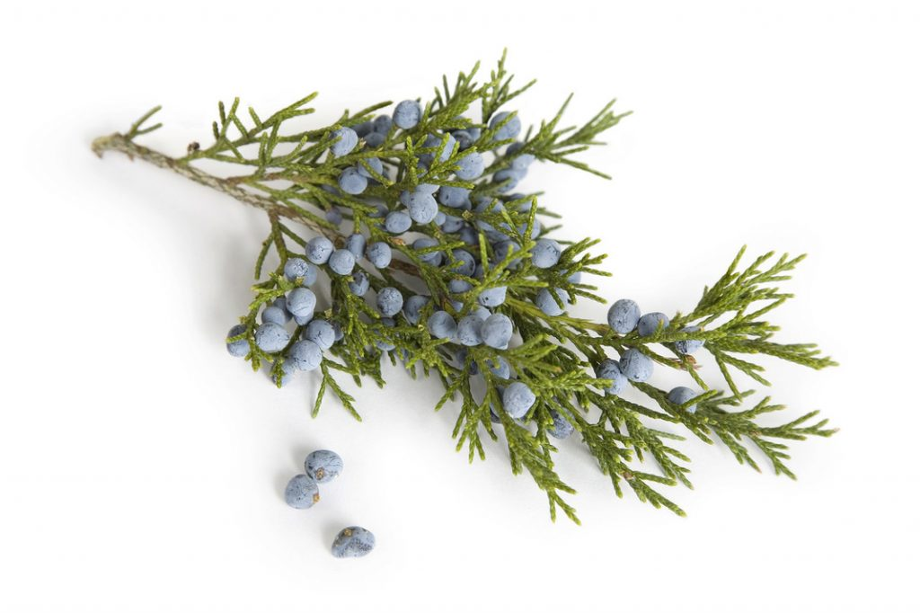 History of juniper essential oils