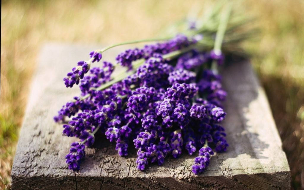 Lavender essential oil for neuropathy