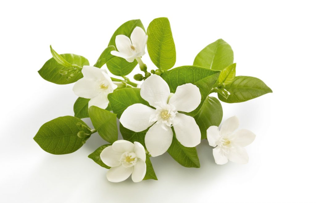 Neroli essential oil for Insomnia