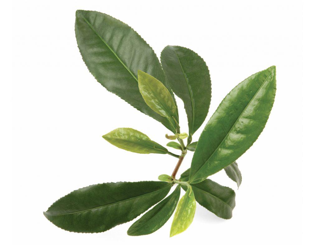 Tea Tree oil for skin tags