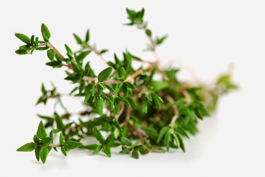 Thyme essential for bronchitis