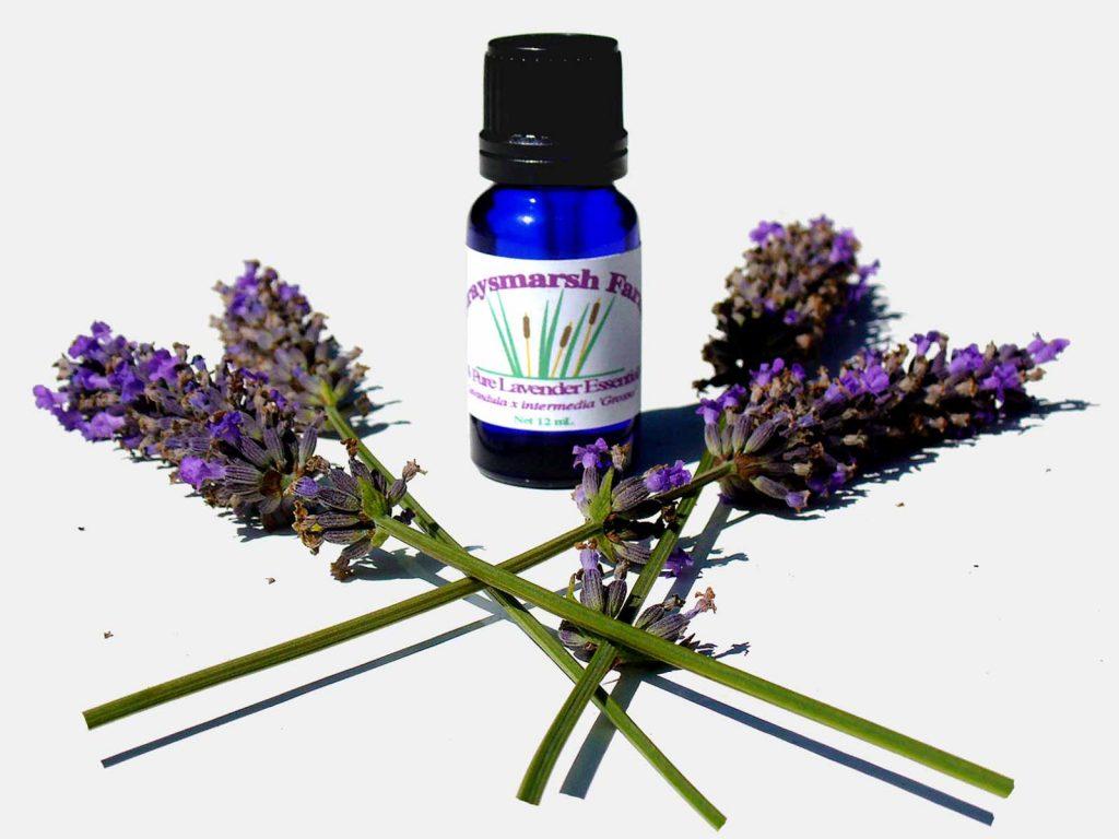 Lavender essential oil for High Blood Pressure