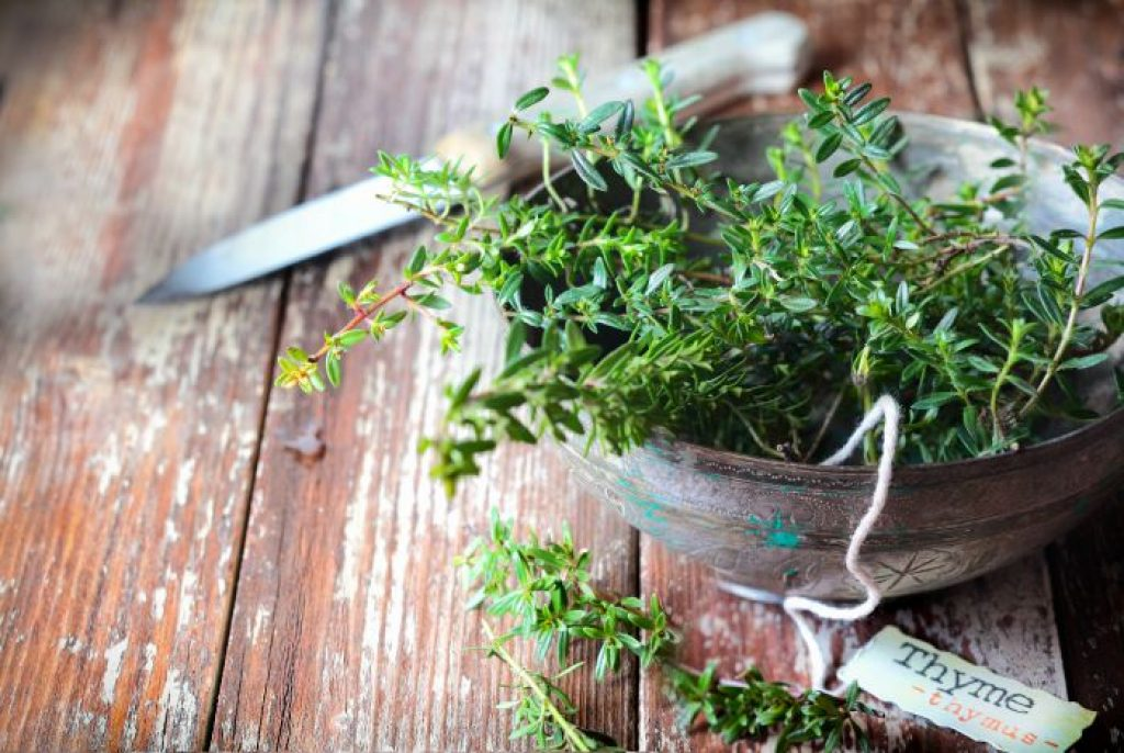 Thyme Essential Oil for Shingles