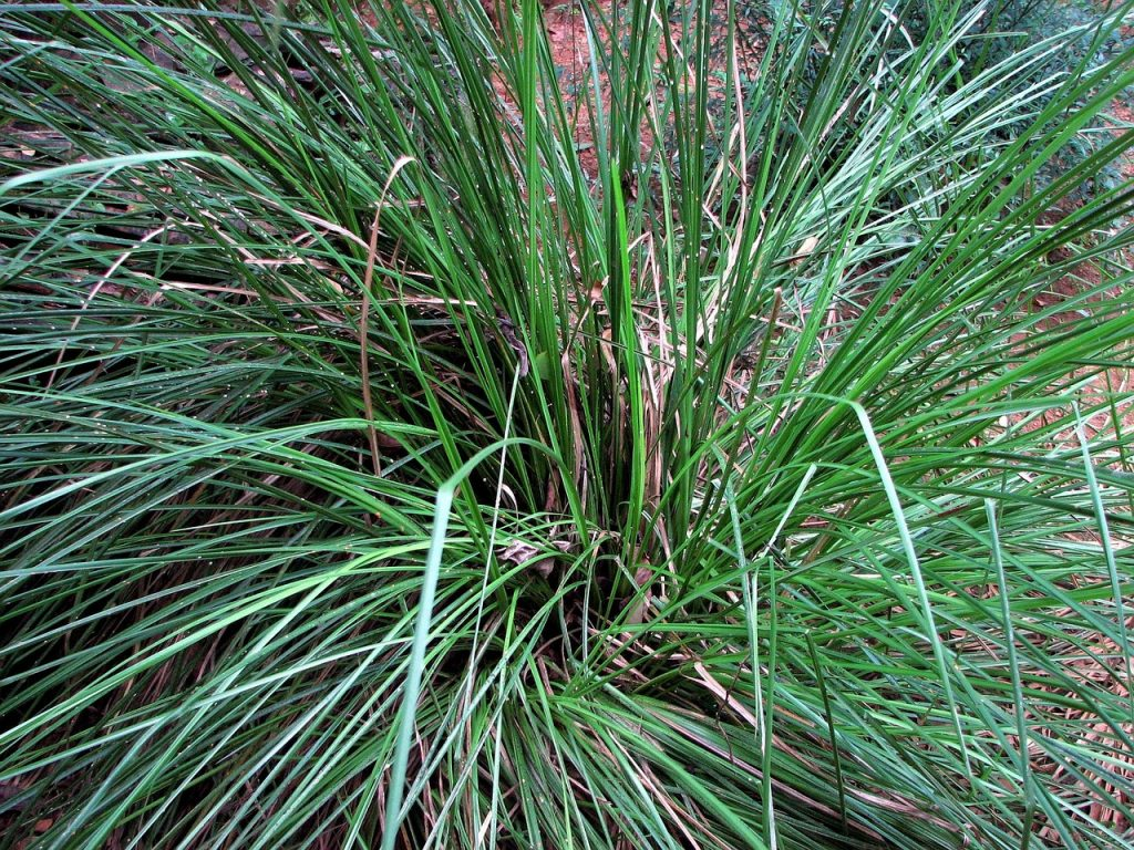 Vetiver essential oil for High Blood Pressure
