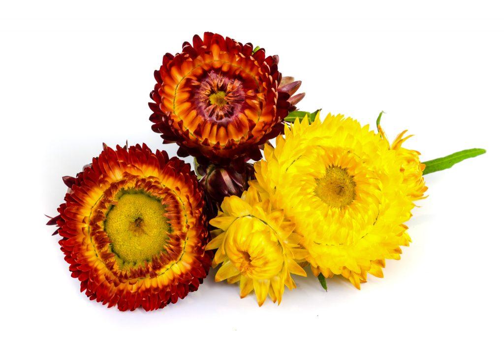 Helichrysum essential oil for stretch marks