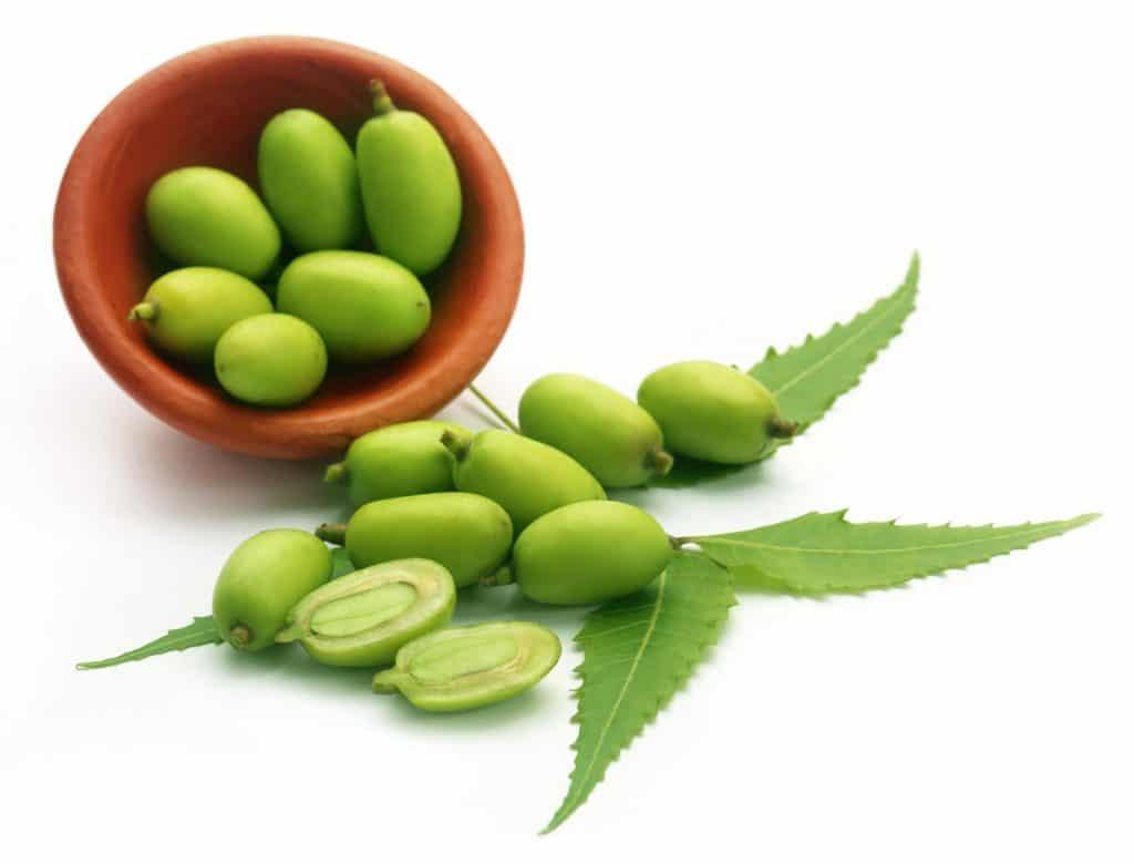 Neem essential Oil ringworm home remedy