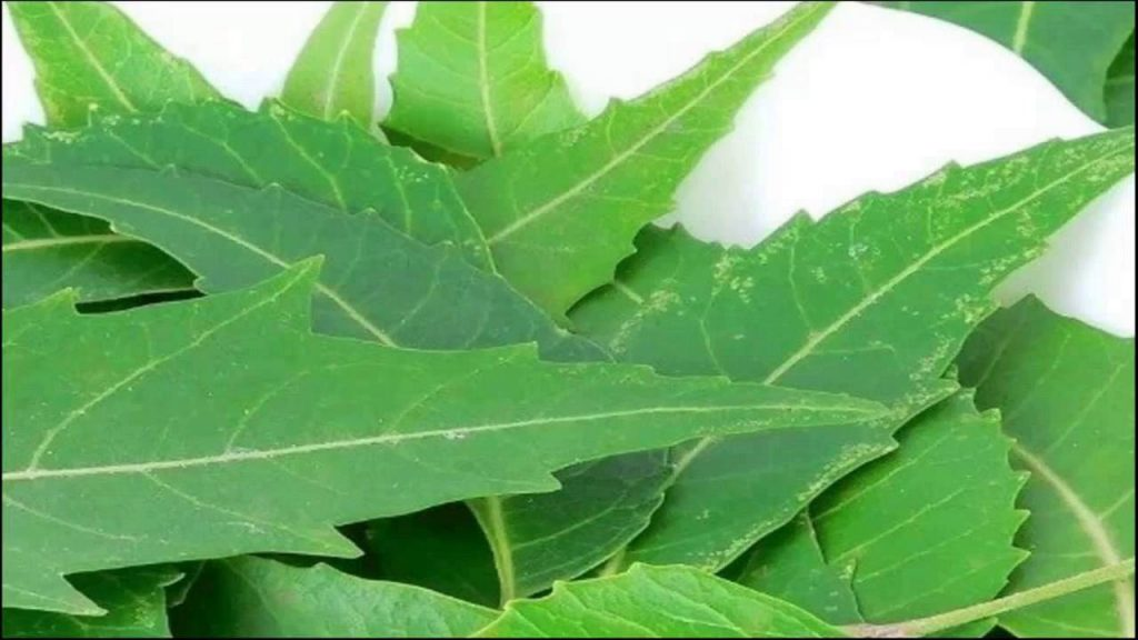 neem leaves as a home remedy for boils