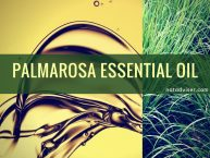 Palmarosa Essential Oil Uses, Benefits and Recipes