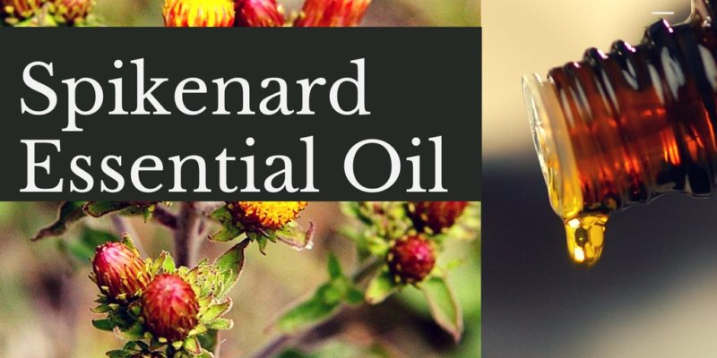 Spikenard Essential Oil Uses, Blends and Recipes