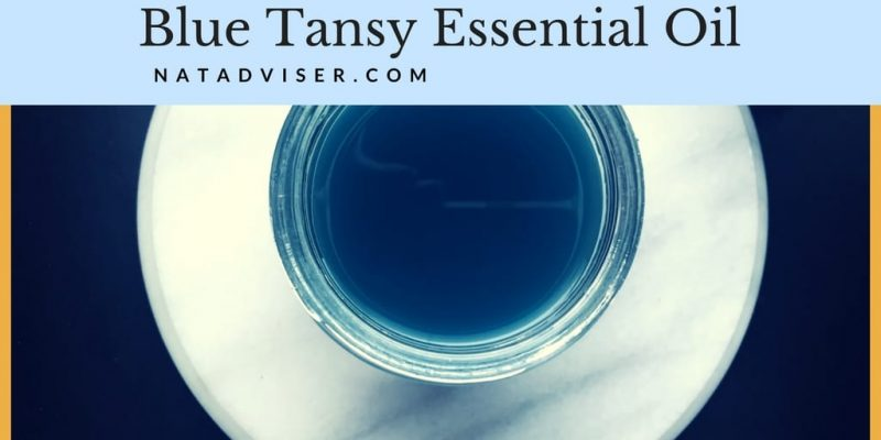Blue Tansy Essential Oil: What You Have To Know About Tanacetum Annuum
