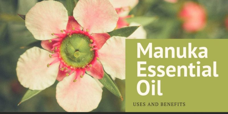 Manuka essential oil as a new phenomenon: uses and benefits