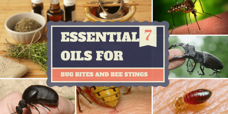 Best Essential Oils For Bug Bites and Bee Stings That Will Help Your Relieve The Pain