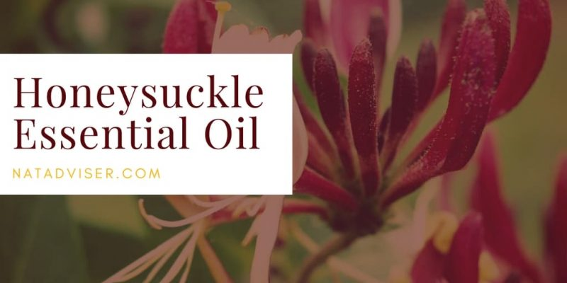 Honeysuckle Essential Oil: Overview, Homemade Blend, and Tips