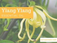 Ylang Ylang Essential Oil: The Best Oil for Medicinal, Emotional, & Beauty Purposes